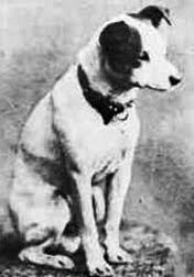 rca dog images