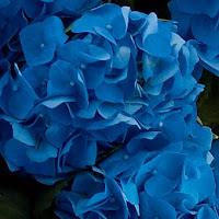 AZUL+2 Tudo azul...!