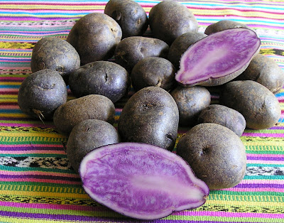 All-Blue Potatoes, as the name suggests, are blue inside and out