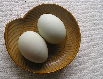 Indian Runner Duck Eggs