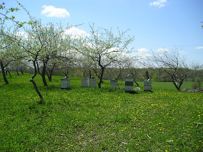 Meeting Place Organic Farm Orchard with Beehives