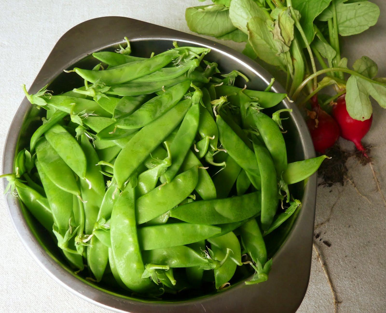 Seasonal Ontario Food: Norli Snow Peas