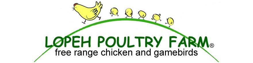 Lopeh Poultry Farm: Kabir Chicken