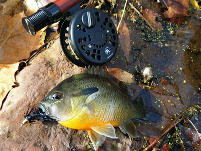 Pennsylvania Sunfish on the fly with Albright Reel and L.L. Bean Fly Rod