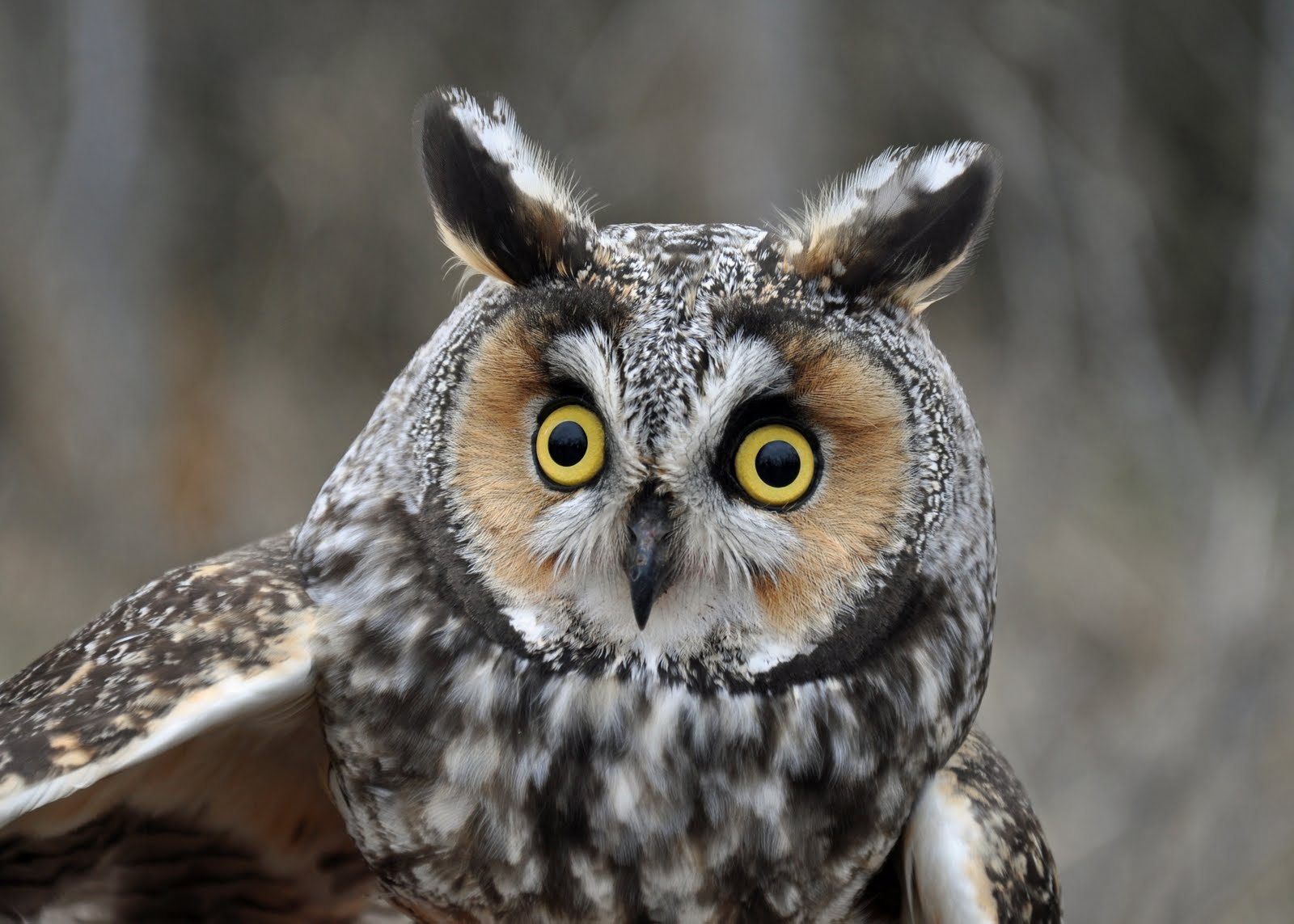 Nature. Observation. Discovery. Community.: Owl Trapping ...