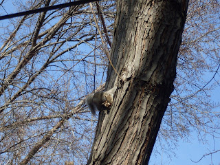 Urban Science Adventure Be On The Look Out For Squirrels