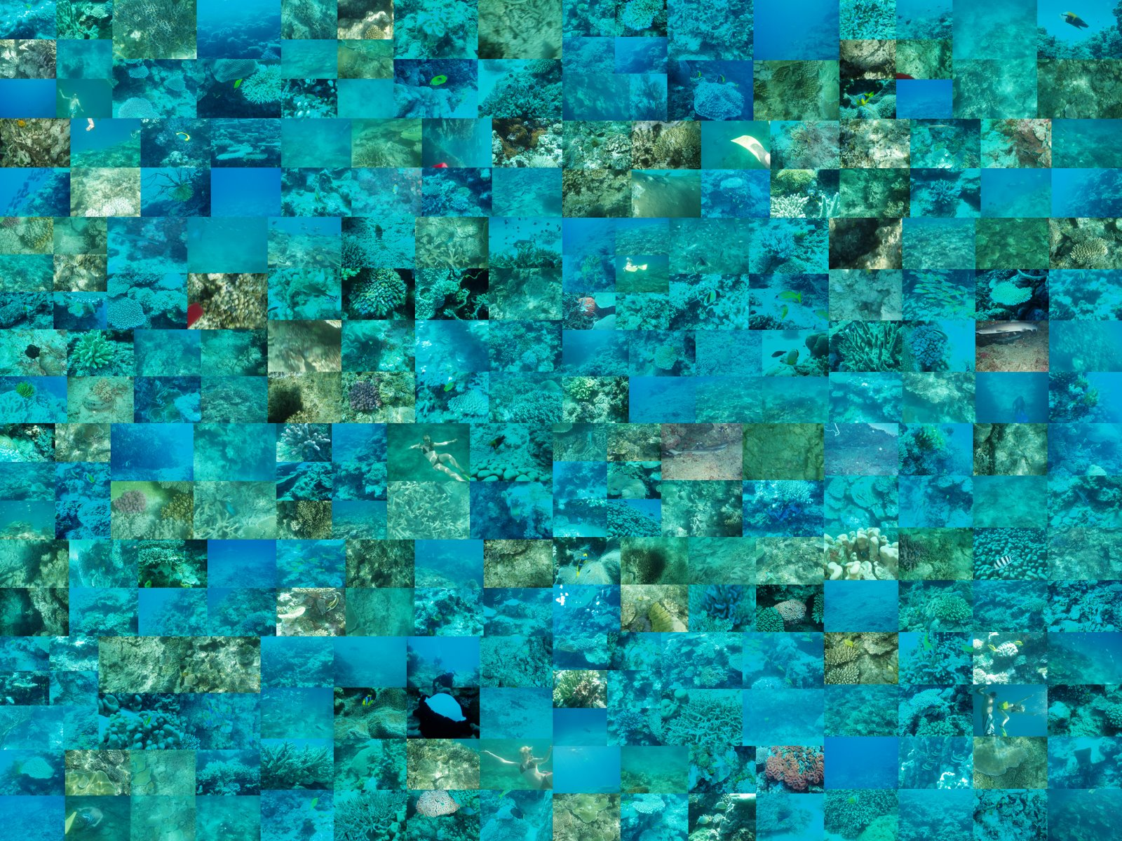 something found or shared: Fiji underwater collage