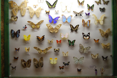 collection of butterflies on a board
