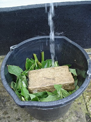 How to make liquid fertilizer from comfrey