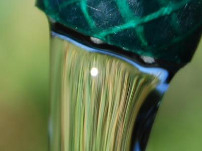 Water pouring out the end of a green hose pipe