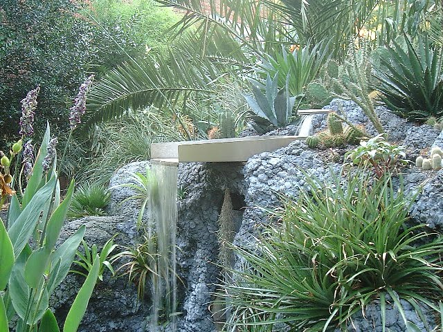 Hardy cacti and succulents for growing outside the garden Can succulents grow outside
