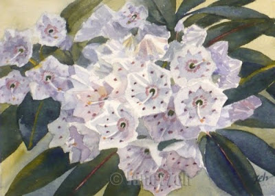 Mountain Laurel watercolor flower painting