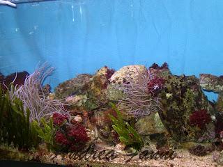 acquario marino mediterraneo