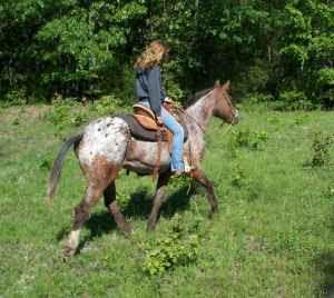 5 Acre Dream (minus the 5 acres): Craigslist Horse