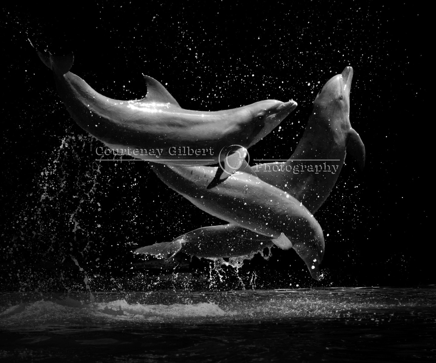 COURTENAY GILBERT photography: Dolphin Ballet