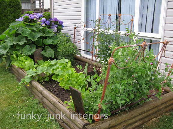 Learn how I use rusty vintage headboards for a garden trellis, plus loads of other garden growing tips! Click to learn more. #gardening #vegetables #flowers