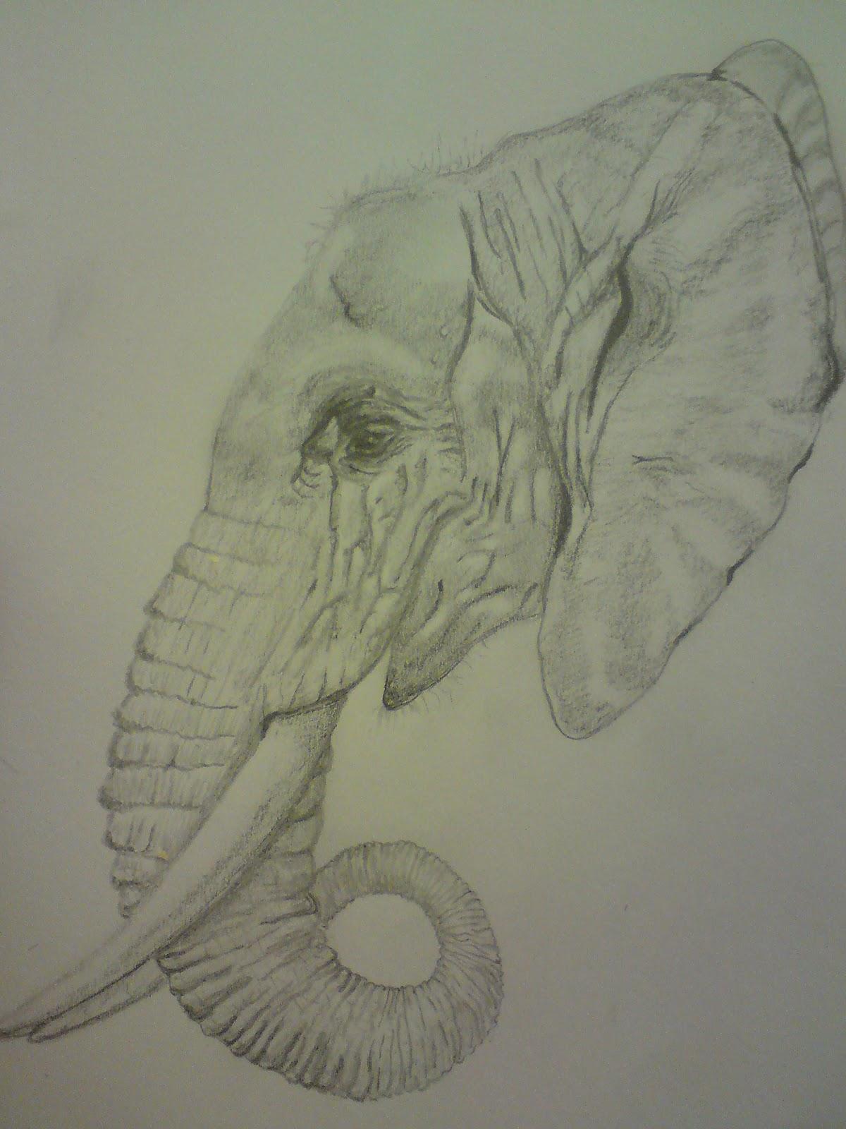 art evolved  life u0026 39 s time capsule  the elephant gallery
