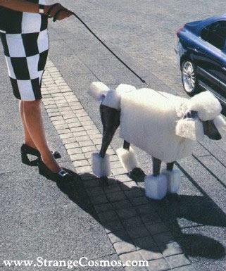 Tendencias en peluquería canina