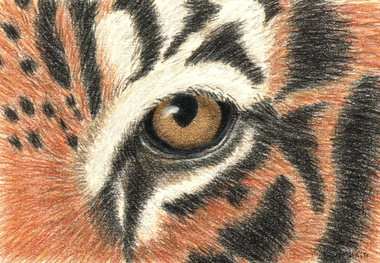 helm tigers eye repeat - HD1481×1028