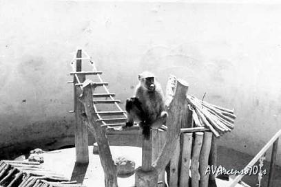 [Aldeia+dos+Macacos.Parque+Infantil-Mazungue.jpg]