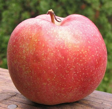 a ribbed red apple