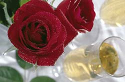 [Wine_Roses.jpg]