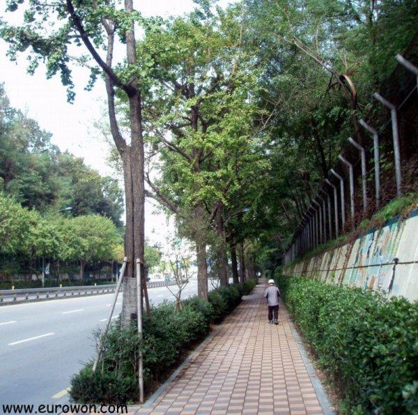 Calle de Seúl en Corea con árboles de gingko