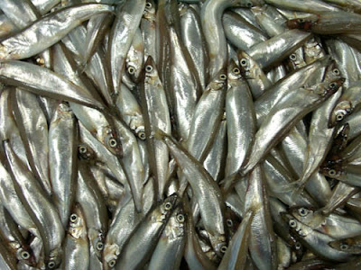 Capelin Fish Isolated Royalty Free Stock Photos - Image ...