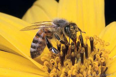 m y : 蜜蜂神奇消失