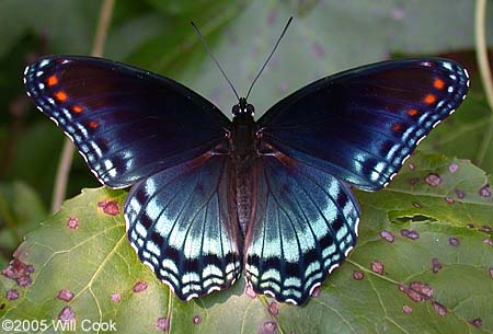 Top 10 Most Beautiful Butterflies in the World ~ Hot Models