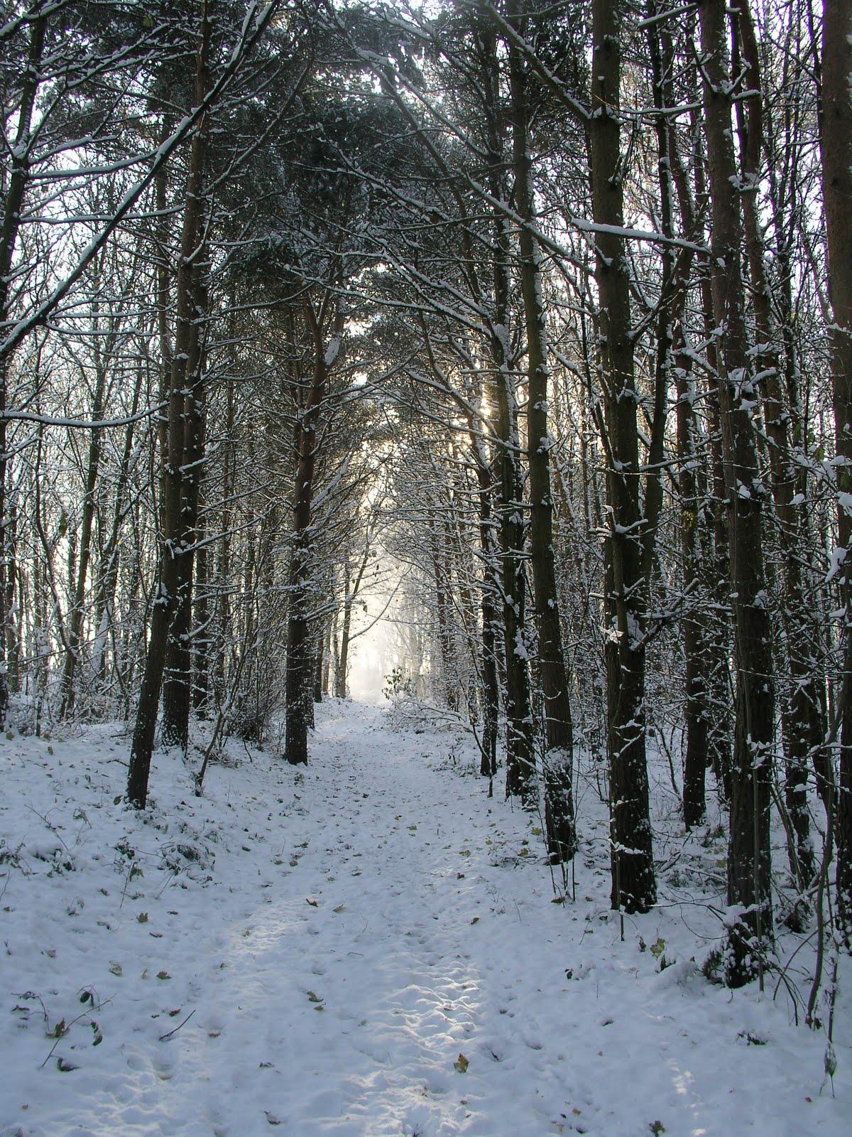 The Woods Wood Be Quiet If No Birds Sang Except The Best: TenHornedBeast: Winter Woods: Tunnels Of Light