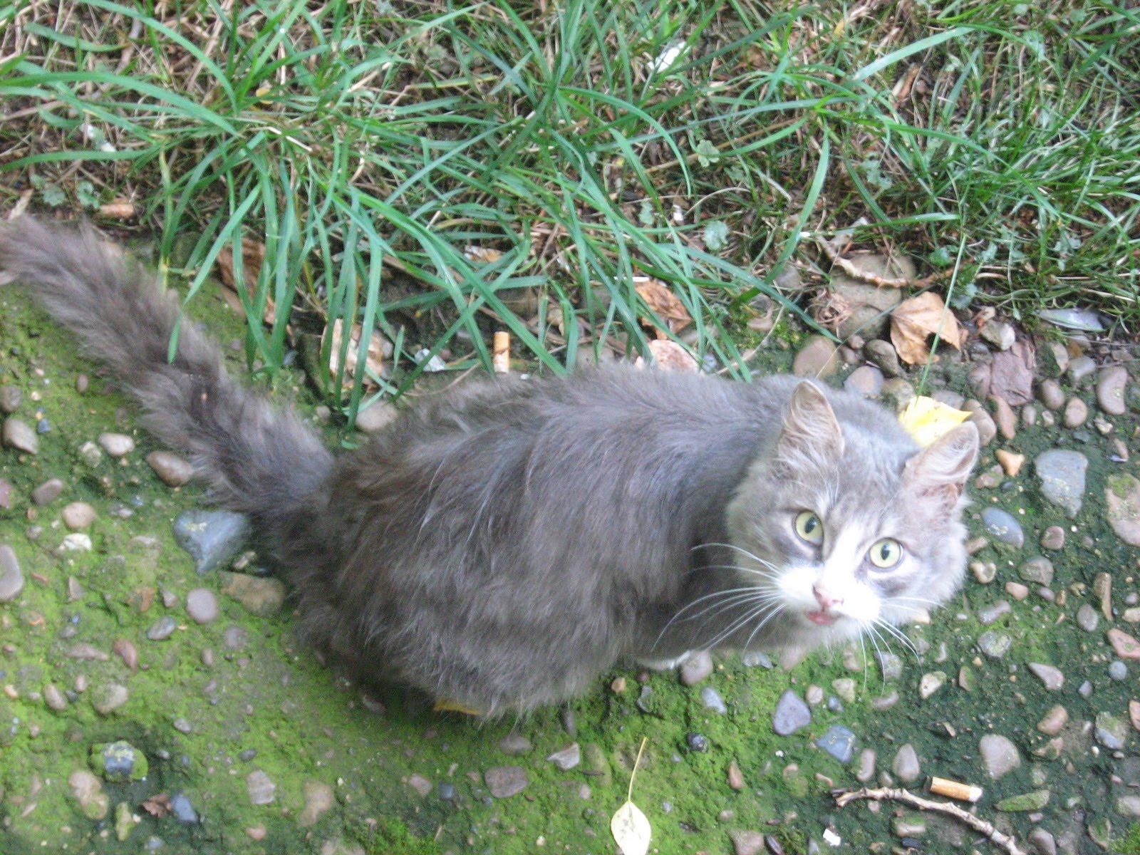 april fools� funny cats � russian cats pictures