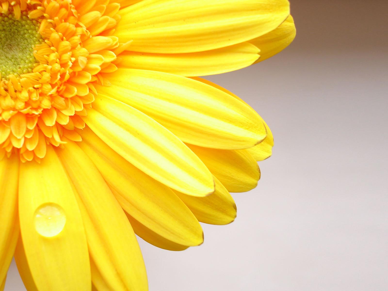 Bloemen Achtergronden | HD Wallpapers