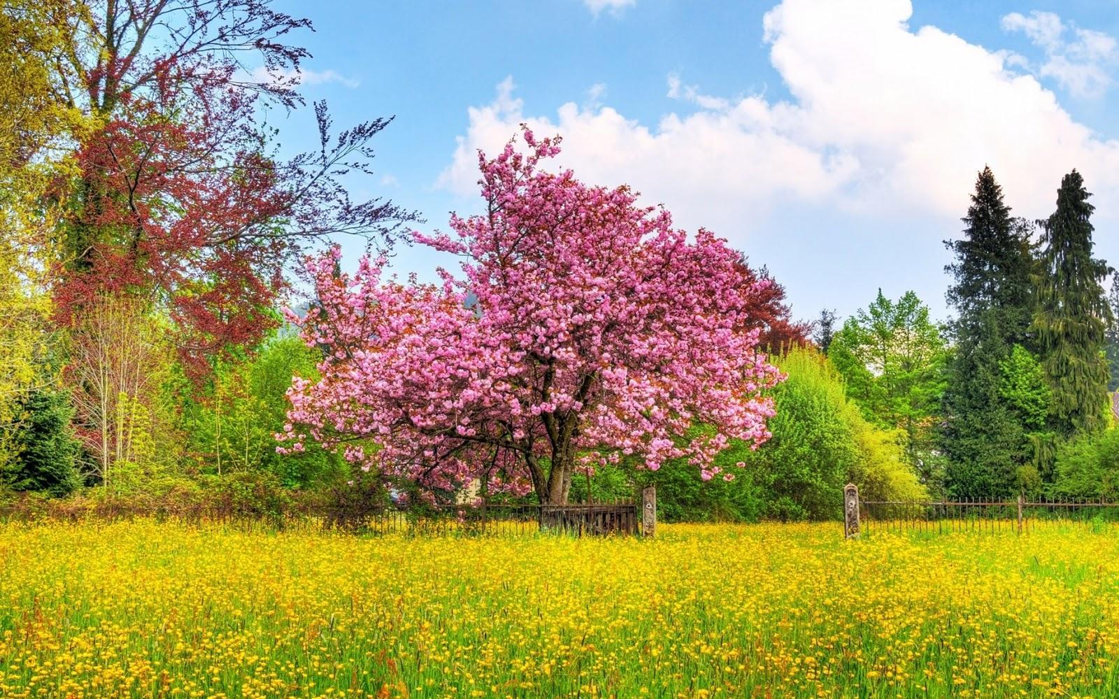 lente achtergronden hd - photo #22
