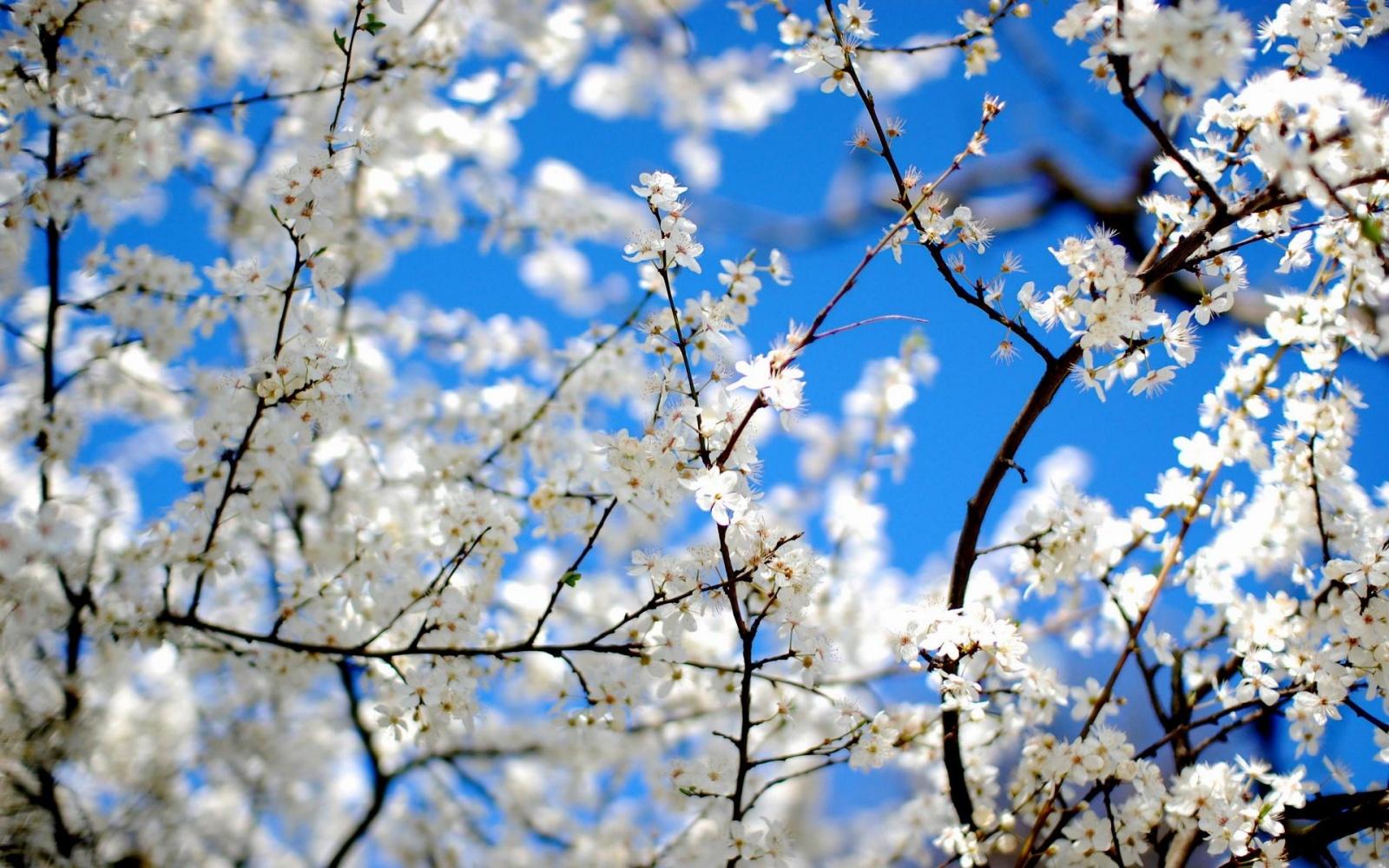lente achtergronden hd - photo #1