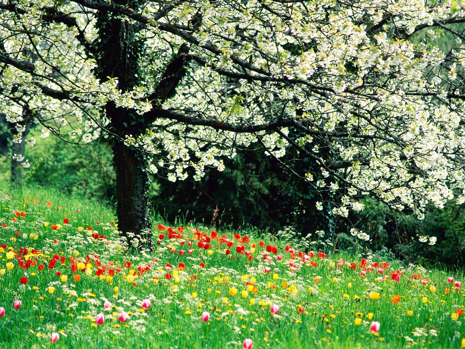 lente achtergronden hd - photo #29