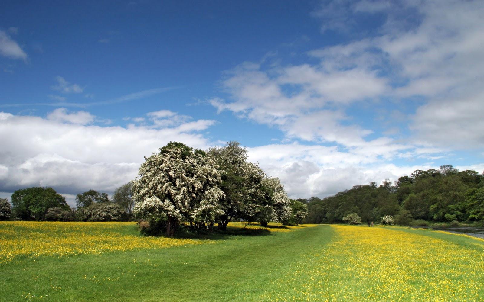 lente achtergronden hd - photo #26