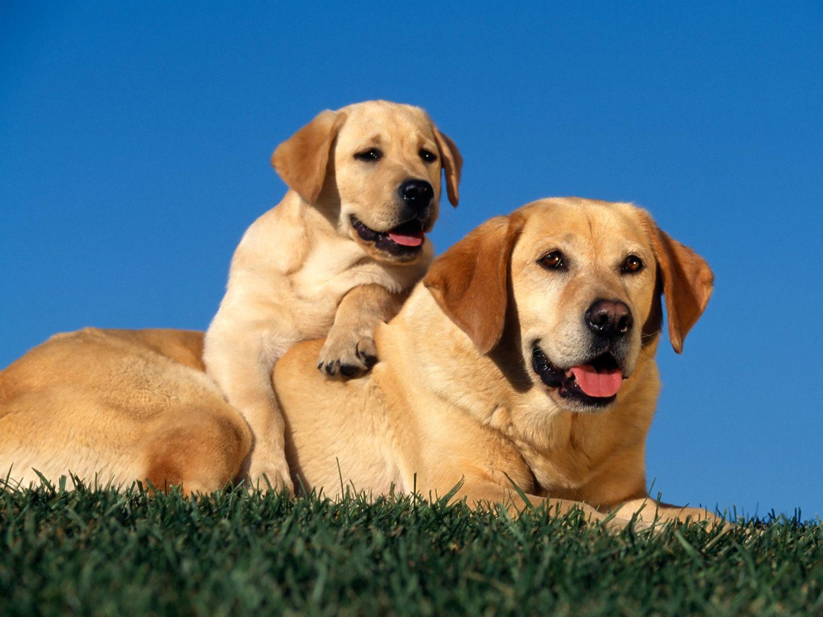 honden achtergronden hd wallpapers - photo #2
