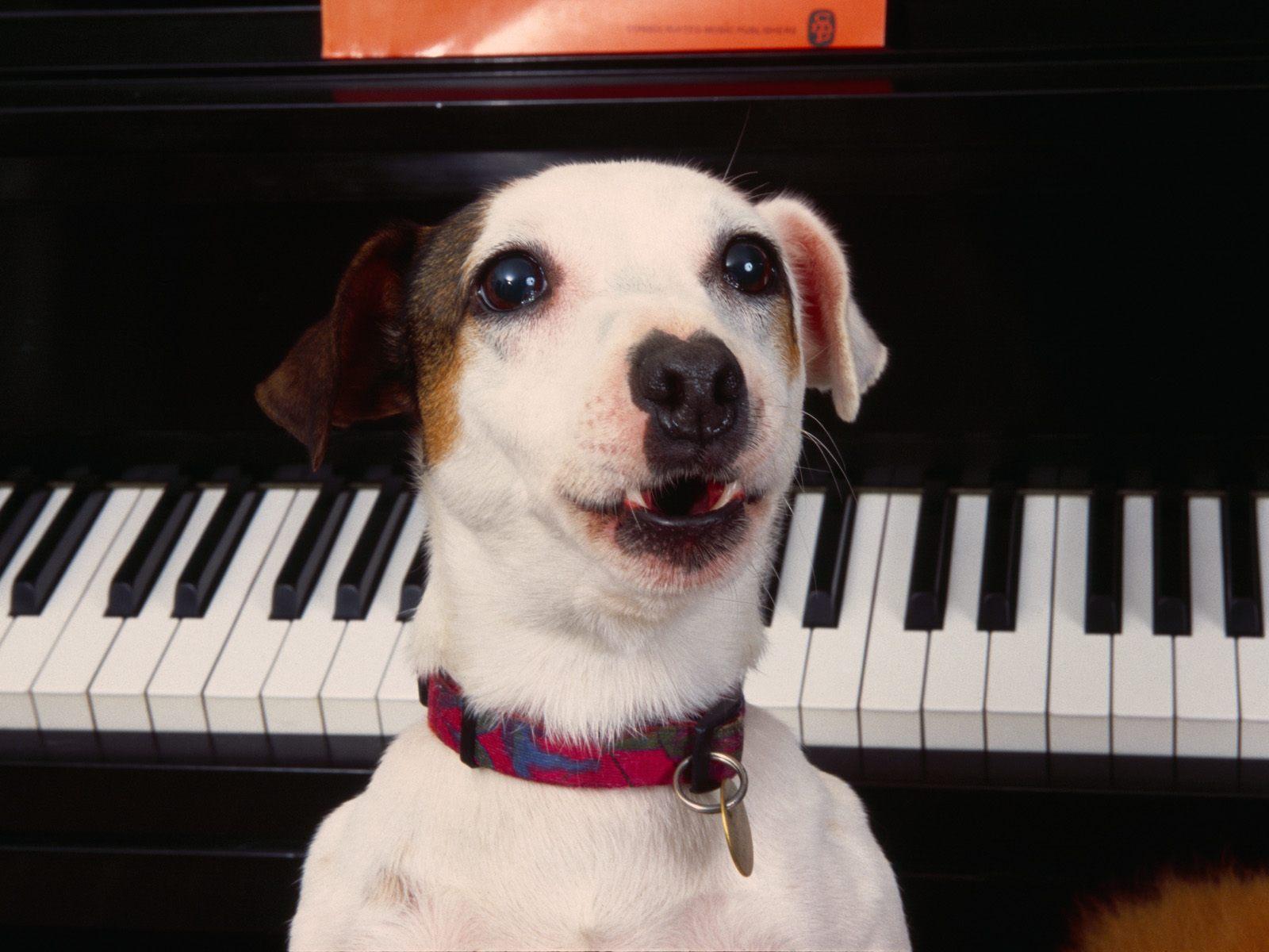 foto van een hond met een piano op de achtergrond