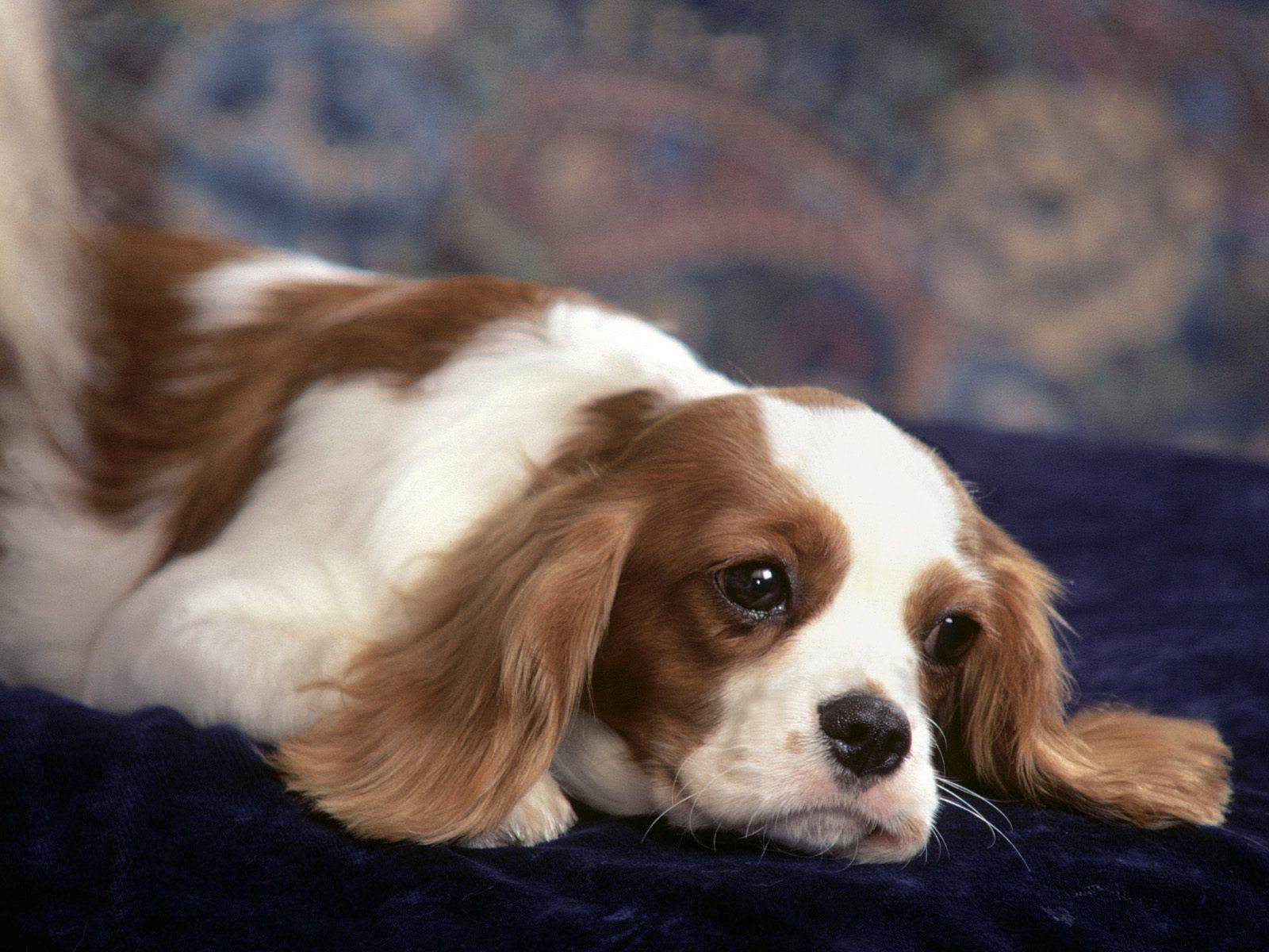 honden achtergronden hd wallpapers - photo #11