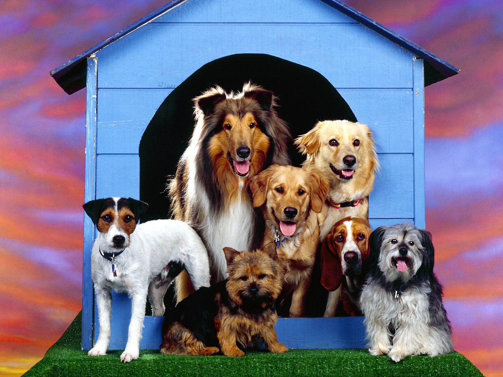 Foto van een groepsfoto van honden die voor een hondenhok zitten