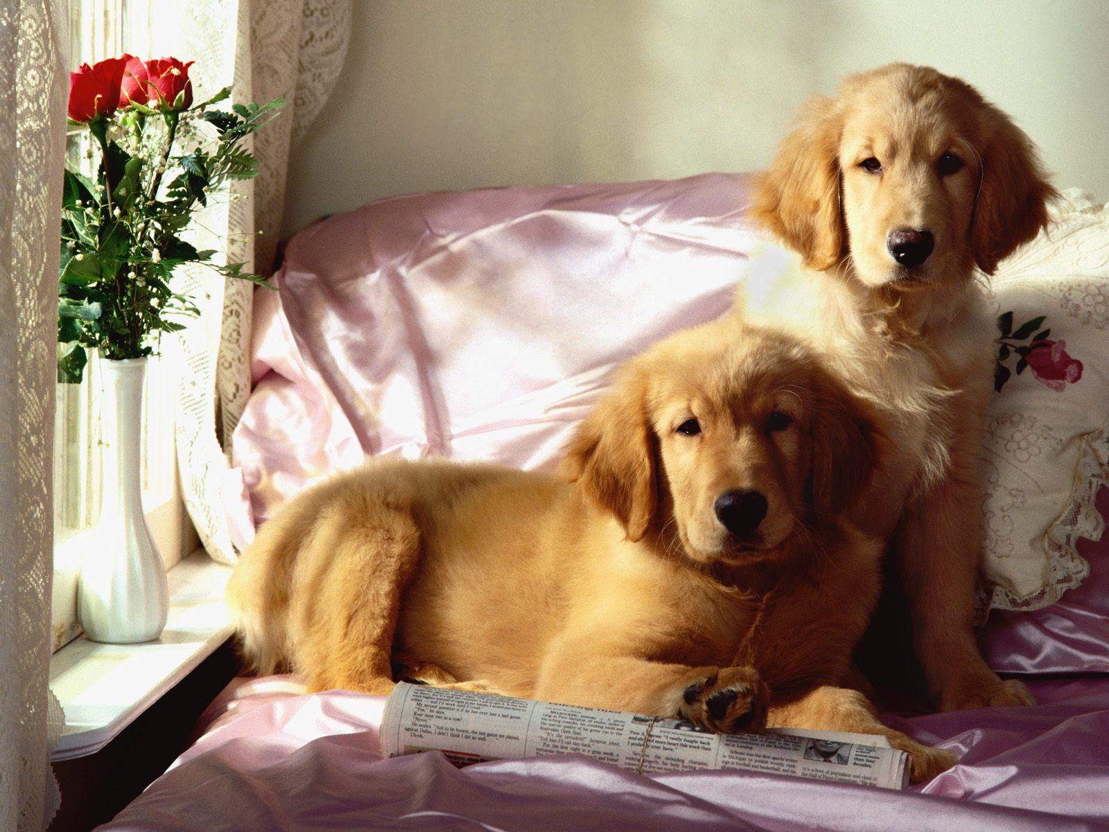 honden achtergronden hd wallpapers - photo #45