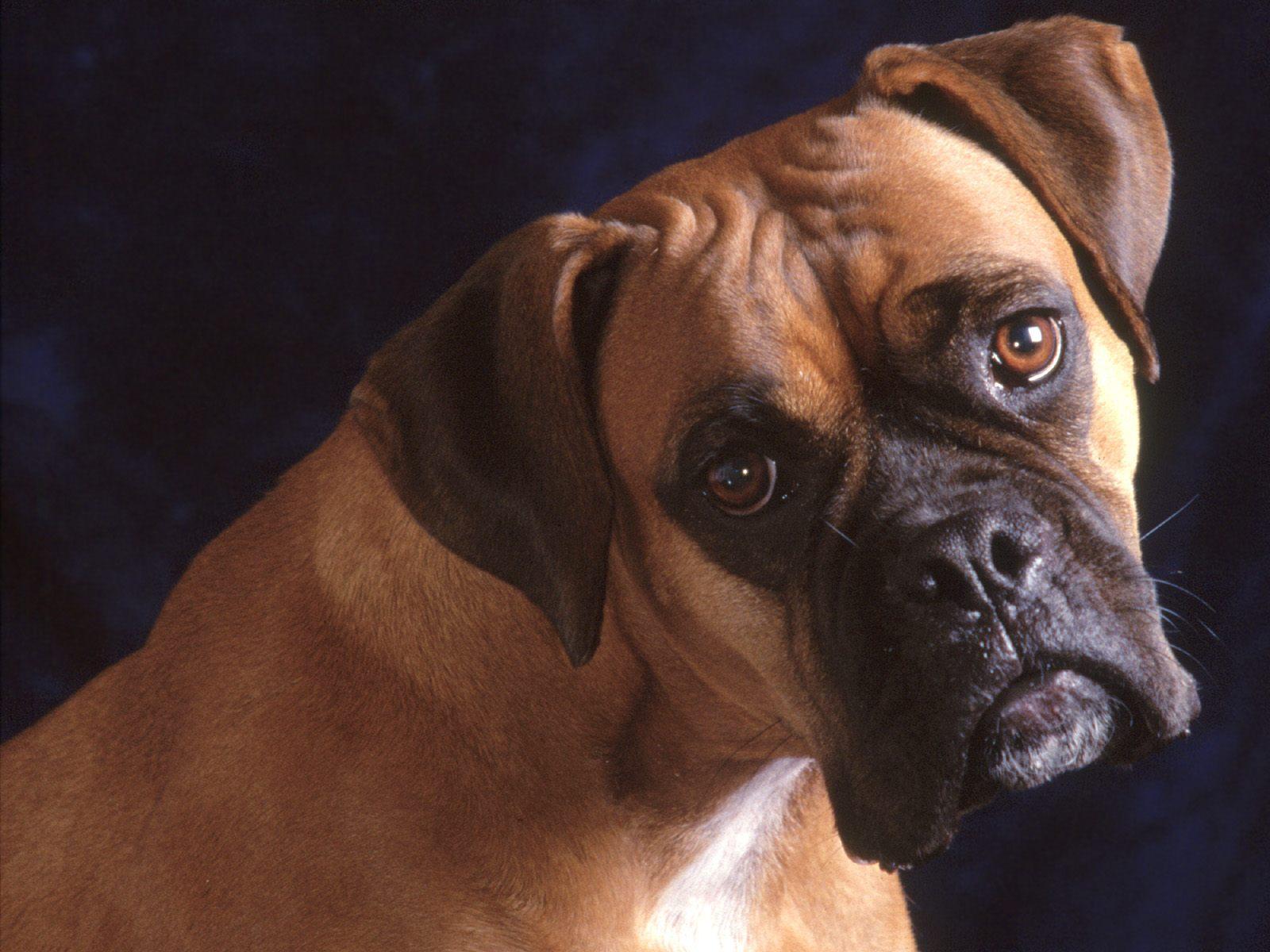 honden achtergronden hd wallpapers - photo #27