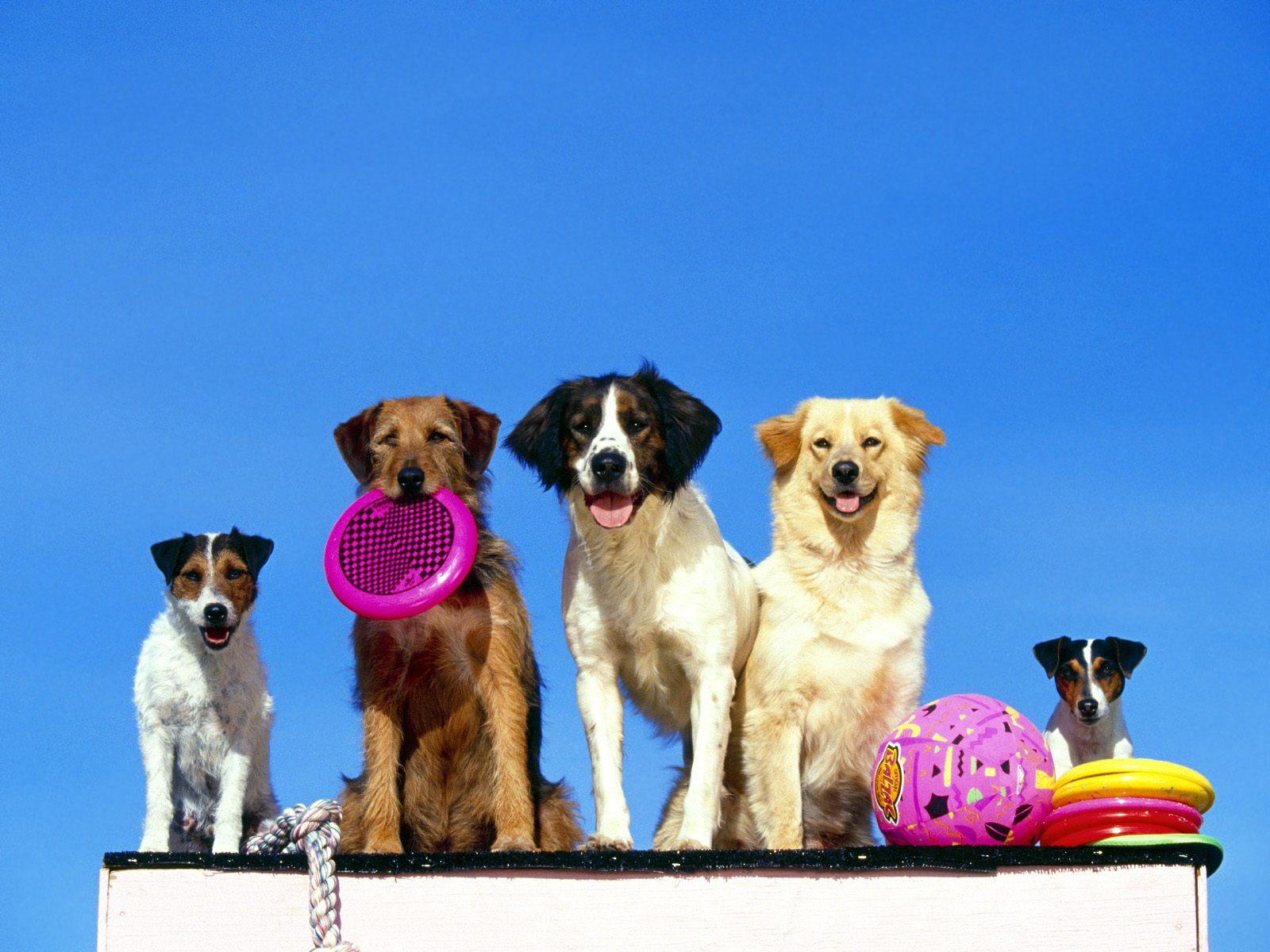 honden achtergronden hd wallpapers - photo #39
