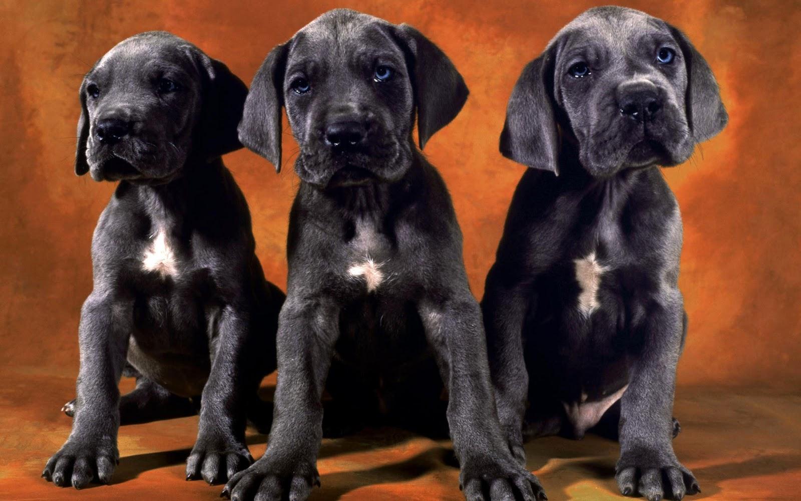 honden achtergronden hd wallpapers - photo #28