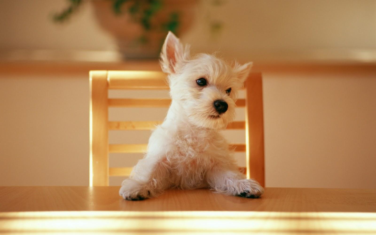 honden achtergronden hd wallpapers - photo #19