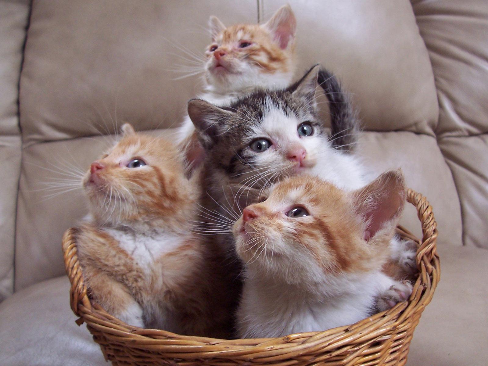 Hd wallpaper kucing - Katten Achtergronden Hd Wallpapers