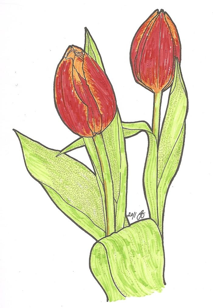 tulip tävling