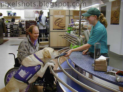 endal at supermarket cash counter,endal getting chocolates from girl,amazing helping pet dogs,trained service dogs,endal helping allen,most famous dogs of world,uk dogs