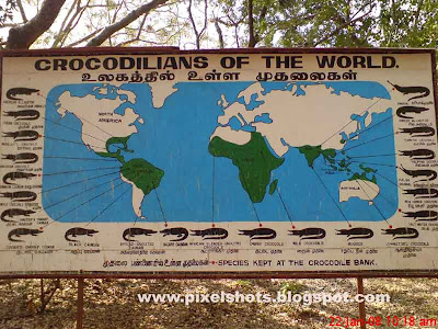an information board from crocodile zoo showing crocodile species all over the world, crocodiles of the world, crocodile map, reptile map, indian reptile zoos
